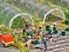 Gemüse und Erdbeeren im Folienanbau in H0 von Busch; Foto: fz