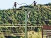 Von Freilassing nach Murnau – Teil 2: Auch wenn dieser Mastschalter noch nicht ganz fertiggestellt ist, zeigt die Aufnahme die gute Wirkung der durchschnittlich 0,3mm dünnen Fahrdrähte; Foto: FZ