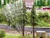 Achtung, Baum fällt!   Foto: Werkaufnahme Noch