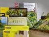 Kleinpflanzen für den Modellbahn-Garten im Vergleich | Foto: Robert Rüschkamp